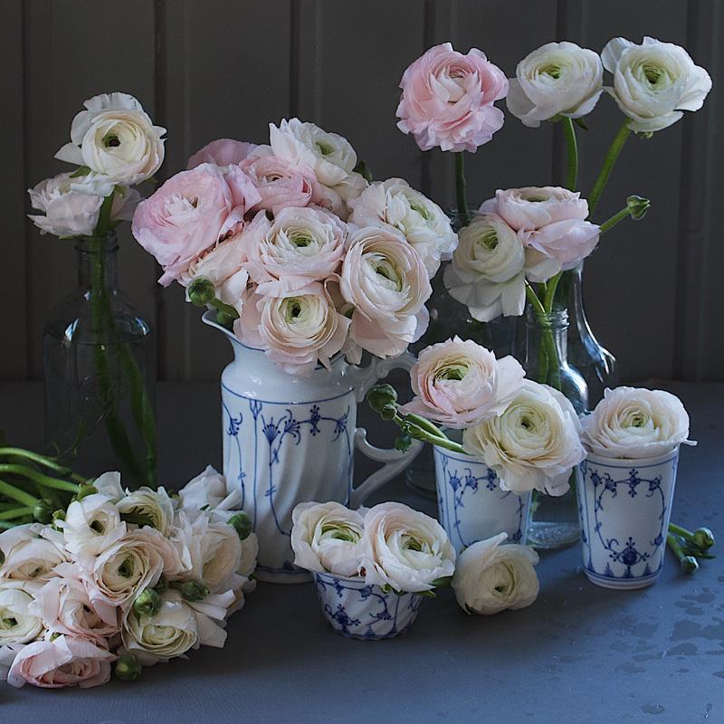 floriss-vakre-vaarblomster-cloni-ranunkler.jpg