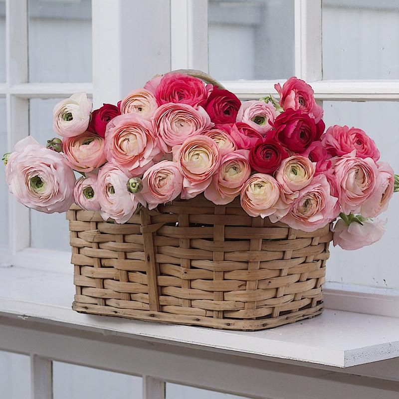 floriss-vakre-vaarblomster-ranukler-i-kurv-i-vinduet.jpg