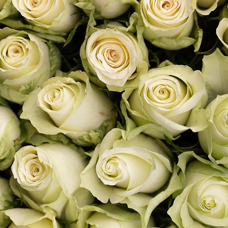 roser-i-alle-farger-og-fasonger-athena.jpg