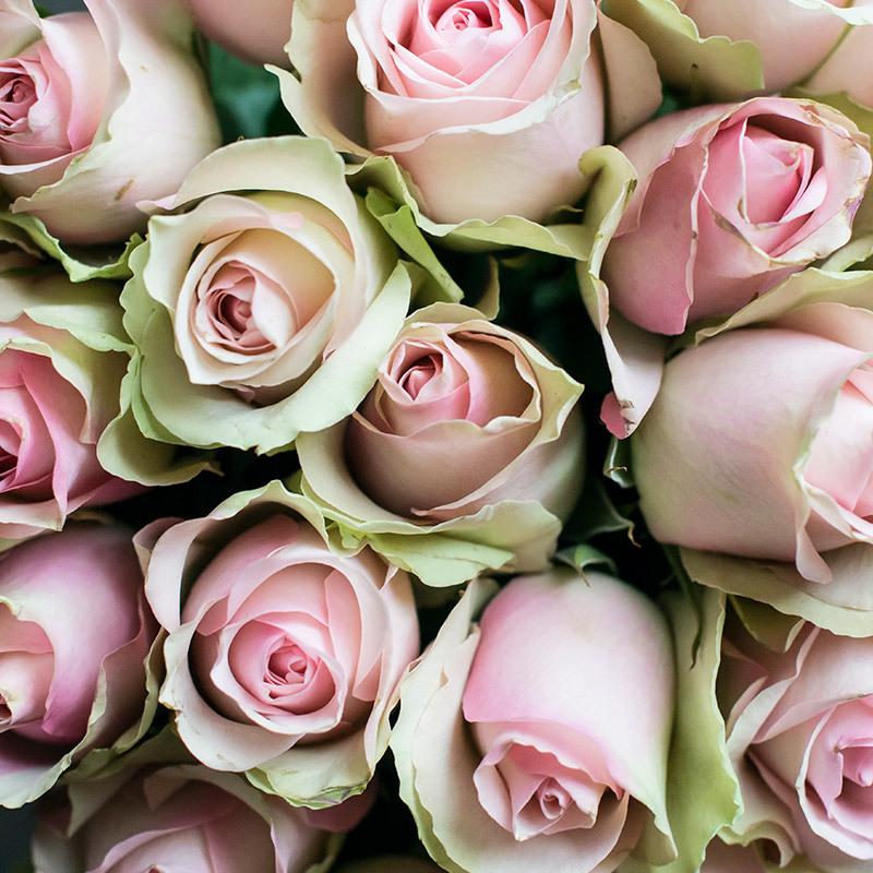 roser-i-alle-farger-og-fasonger-belle-rose-dsc0963.jpg