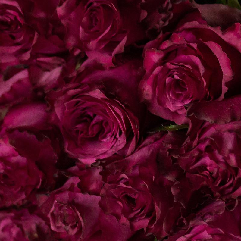 roser-i-alle-farger-og-fasonger-blueberry-roser-img-6503.jpg