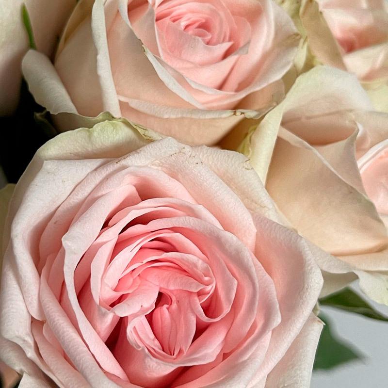 roser-i-alle-farger-og-fasonger-coco.jpg