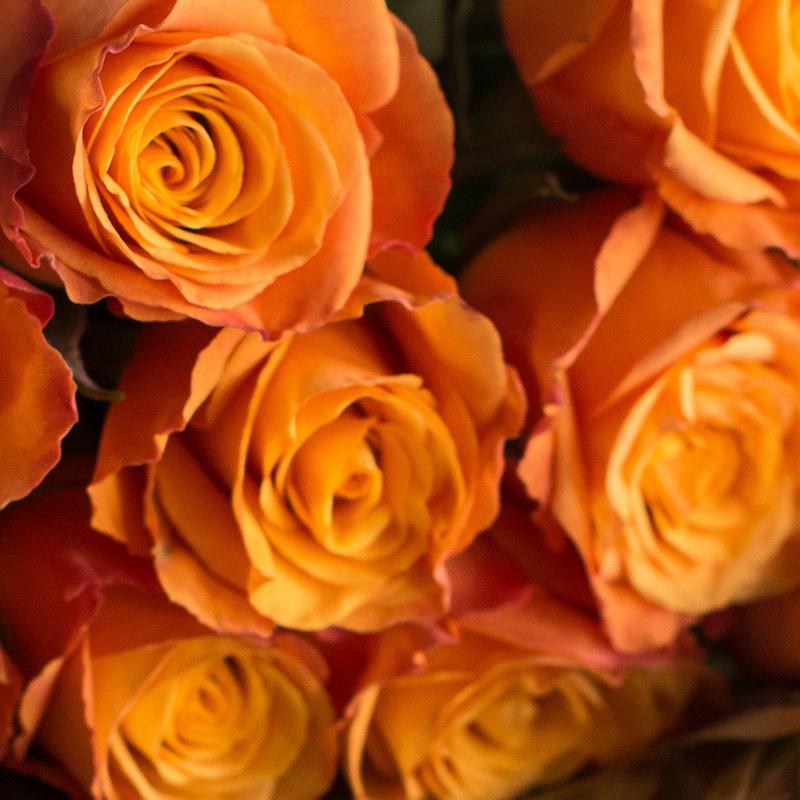 roser-i-alle-farger-og-fasonger-confidental.jpg