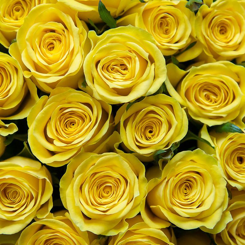 roser-i-alle-farger-og-fasonger-gule-roser-favorittroser-dsc4742.jpg