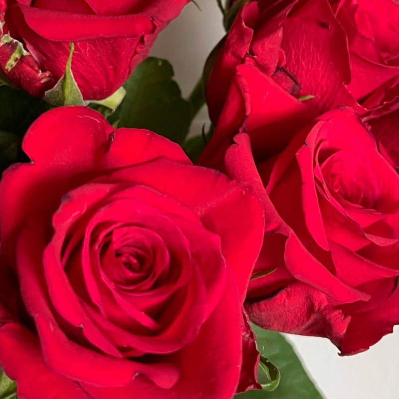 roser-i-alle-farger-og-fasonger-natures-red.jpg
