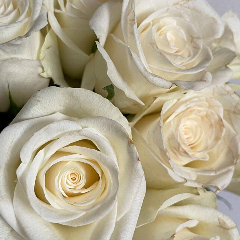roser-i-alle-farger-og-fasonger-natures-white.jpg