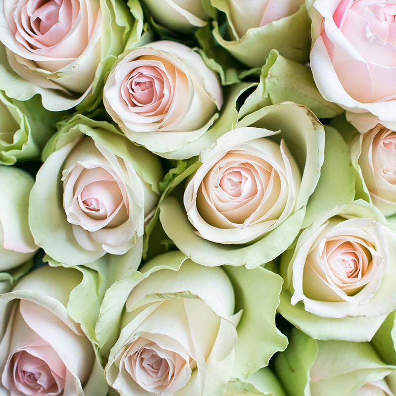 roser-i-alle-farger-og-fasonger-rose-la-belle-dsc0971.jpg