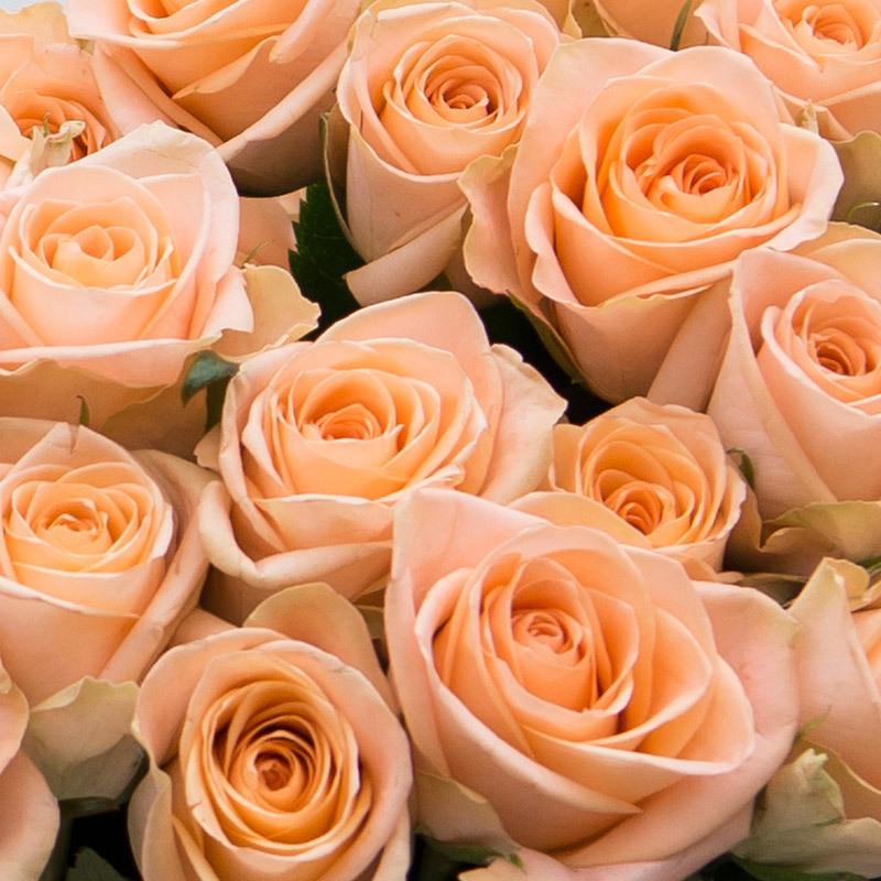 roser-i-alle-farger-og-fasonger-roser-favorittroser-fersken.jpg