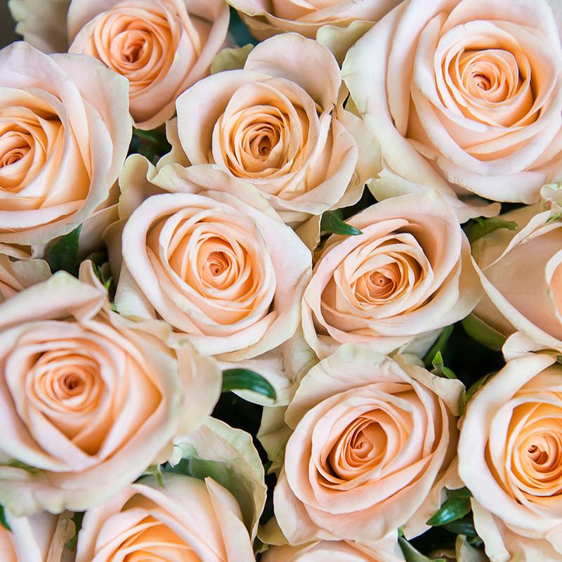 roser-i-alle-farger-og-fasonger-roser-myfair-dsc4748.jpg