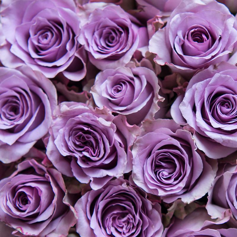 roser-i-alle-farger-og-fasonger-roser-nightinggale-dsc5596.jpg