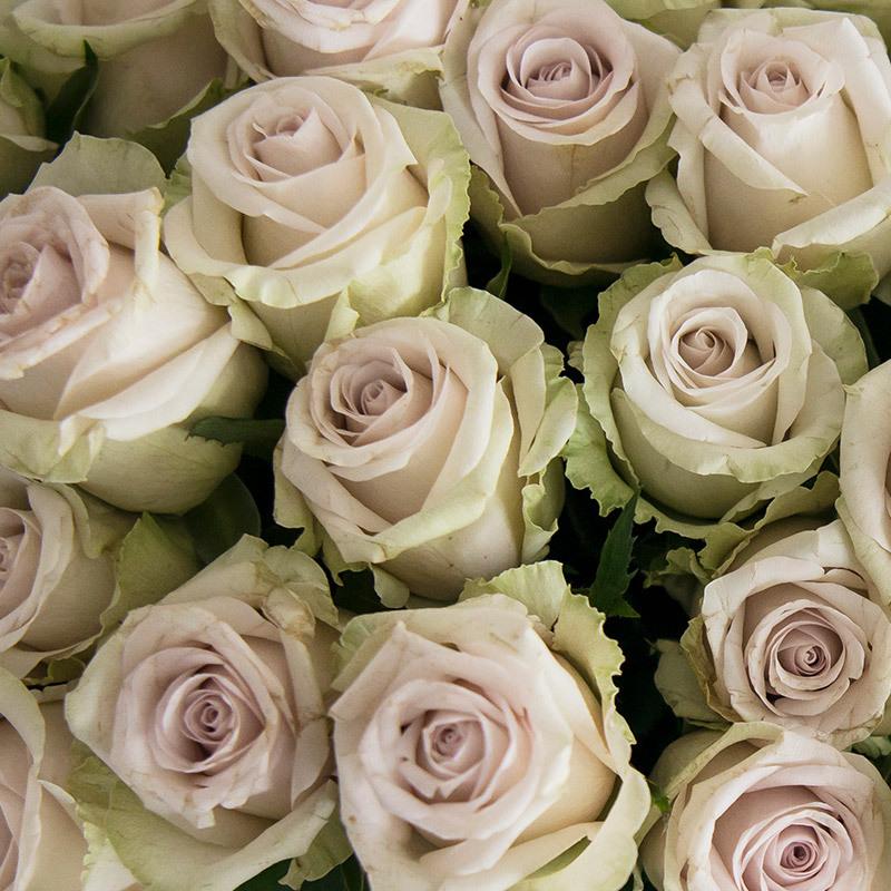 roser-i-alle-farger-og-fasonger-roser-silvey-flame.jpg
