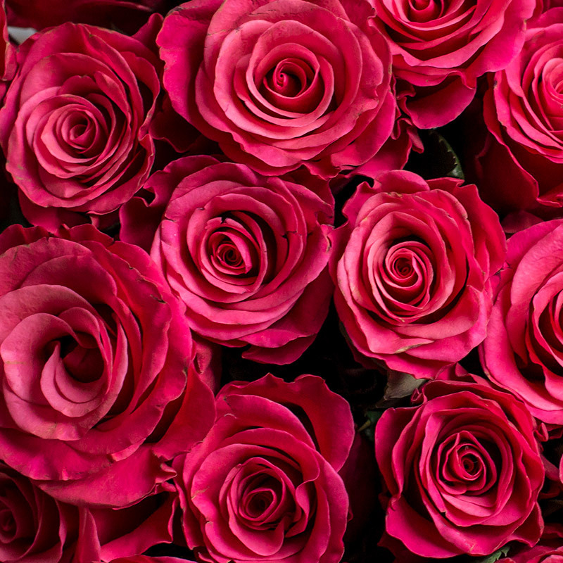 roser-i-alle-farger-og-fasonger-taccazi-roser-dsc0418.jpg