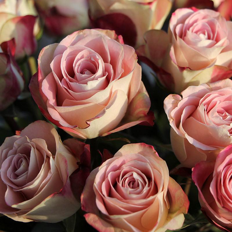 roser-i-alle-farger-og-fasonger-upper-secret.jpg