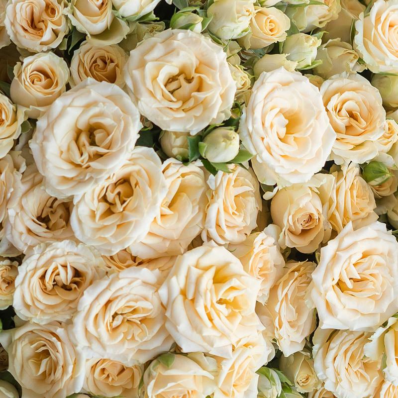 roser-i-alle-farger-og-fasonger-grenroser-salinero-dsc1923.jpg