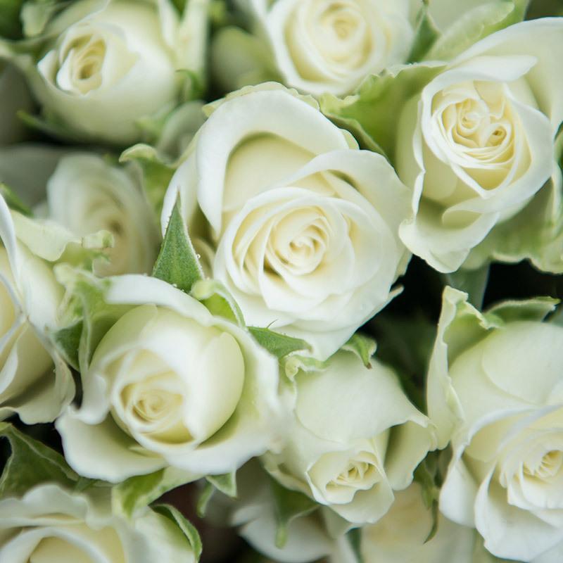 roser-i-alle-farger-og-fasonger-greroser-snowflake-dsc1721.jpg