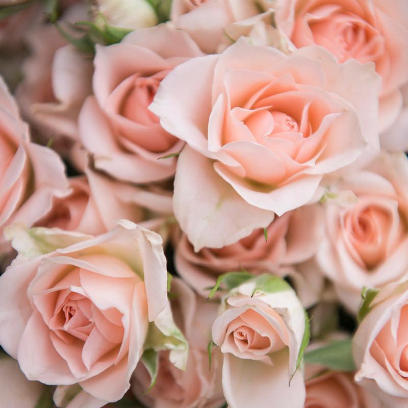 roser-i-alle-farger-og-fasonger-greroser-sweet-sarah-dsc1720.jpg