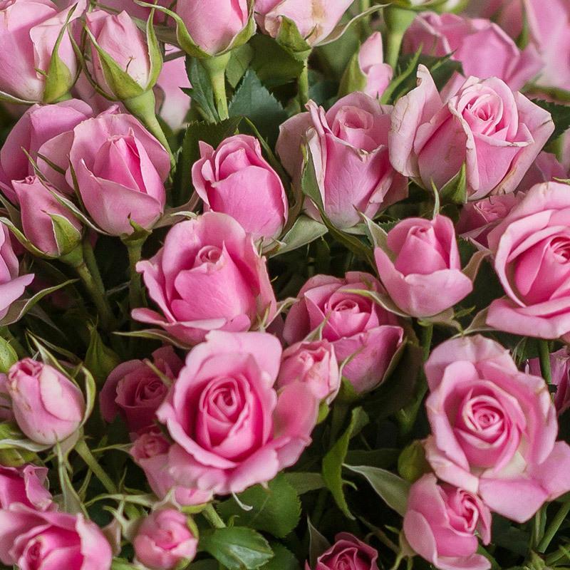 roser-i-alle-farger-og-fasonger-odilia-grenroser-dsc2024.jpg