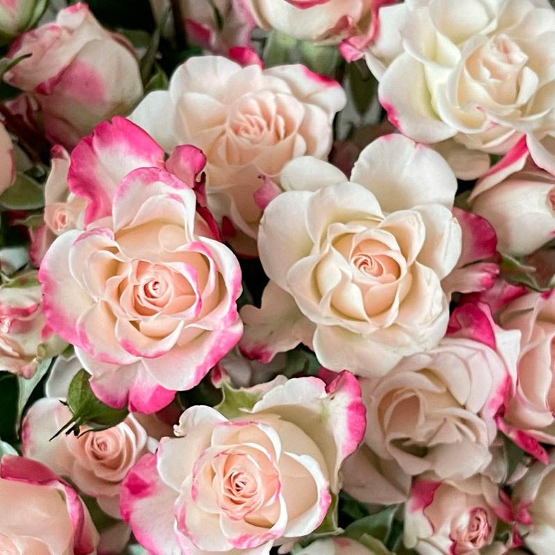 roser-i-alle-farger-og-fasonger-reflex-d58836d7-8239-44e2-8f72-8ac515ca8e82.jpg