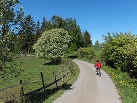 Sykkeltur i Gjefsengutua Foto: Kjersti Andresen
