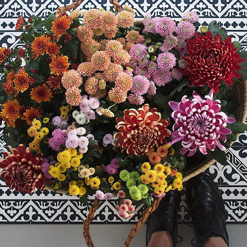 floriss-vakre-vidunderlige-krysantemum-trend-candy-clarner-coctails-candy-fireworks.jpg