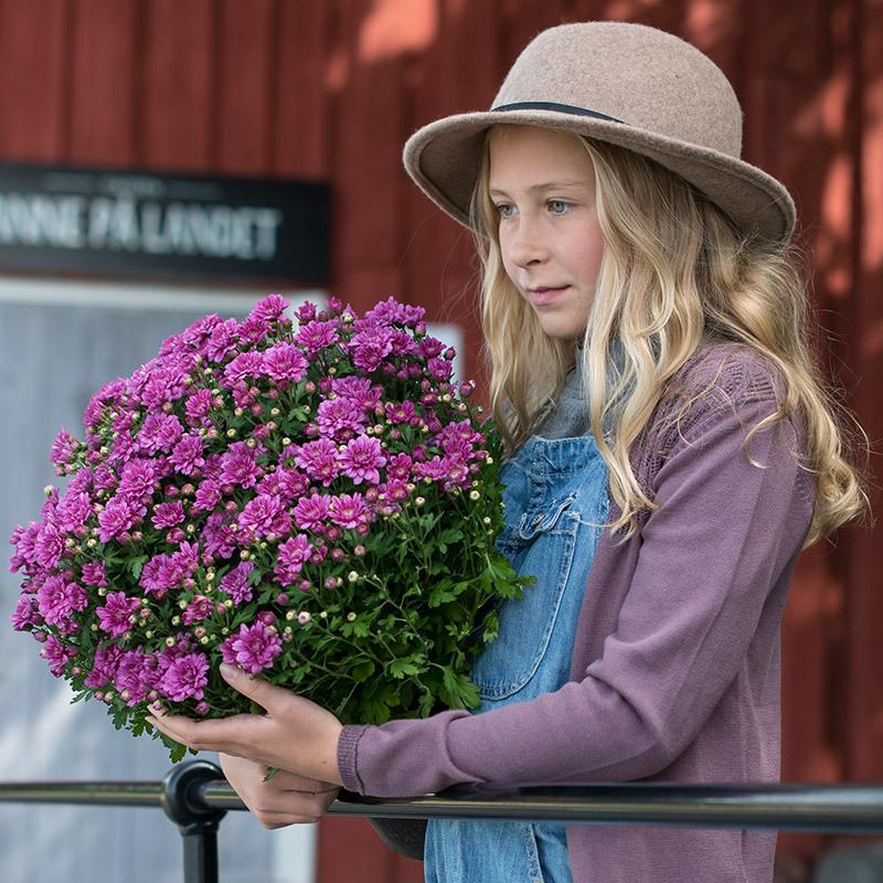 floriss-jente-med-bukett-krysantemum.jpg