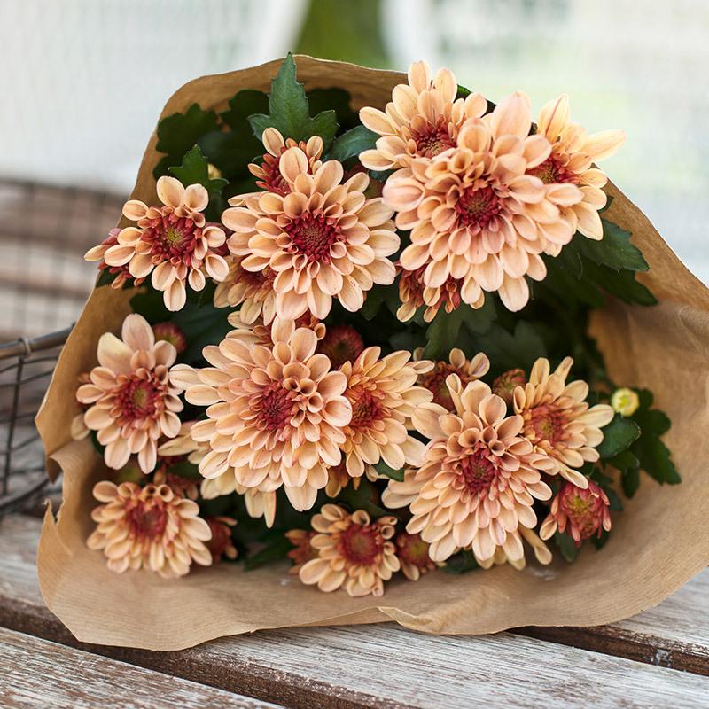 floriss-krysantemum-bukett-4.jpg