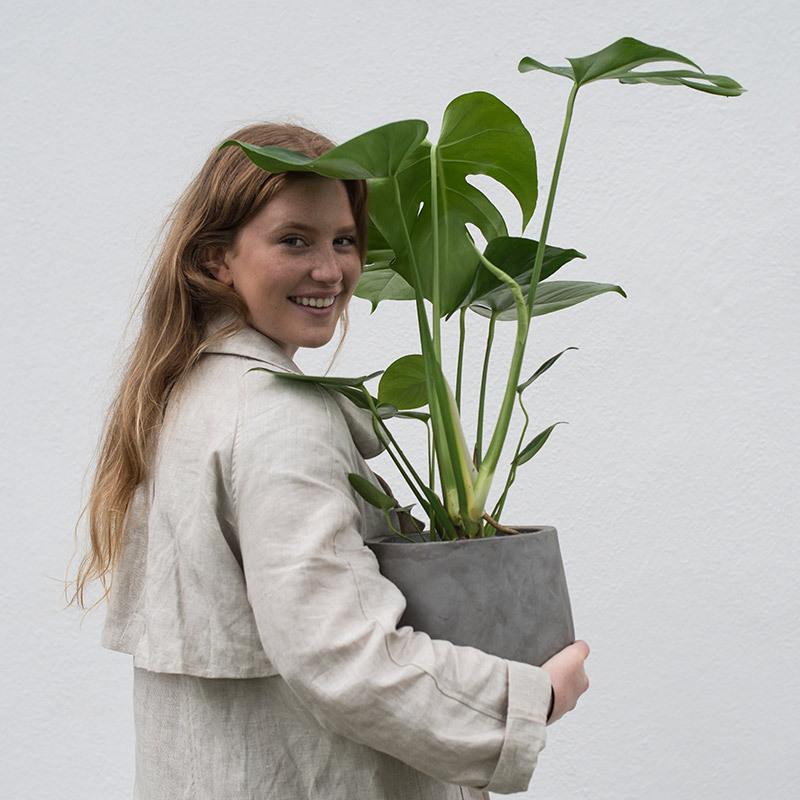 groenne-planter-monstera-vindusblad-3.jpg