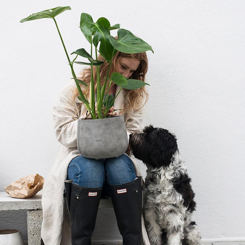 groenne-planter-monstera-vindusblad-4.jpg