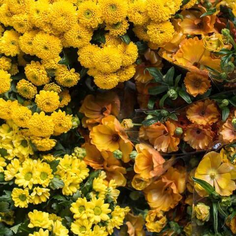 anemone-krysanthemum-buketter_DSC9128