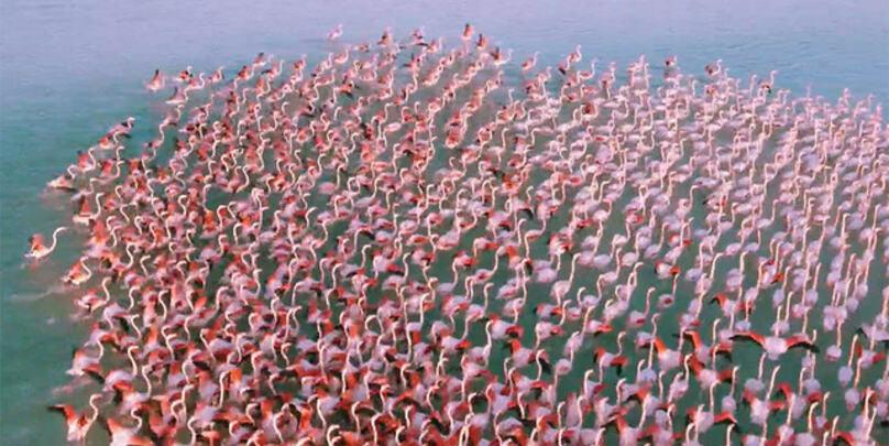 2021-03-17 Kasakhstan Flamingos RJ