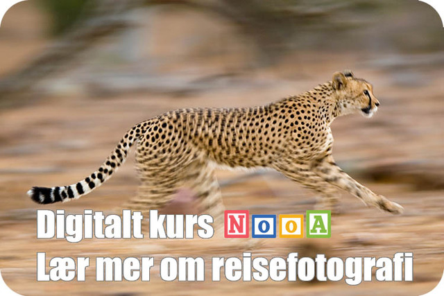 Reisefotograf Annonse Cheeta.jpg