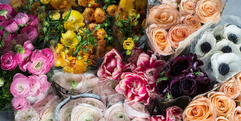 Vårblomster<br/> - fargerike gledesspredere