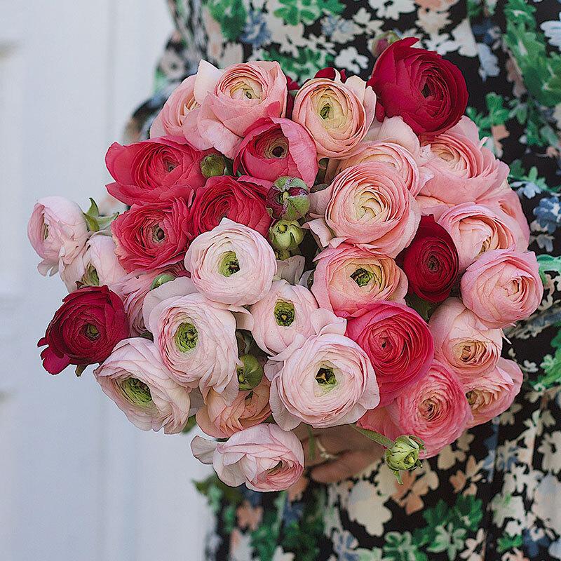 floriss-ranukler-bukett-roed-og-rosa.jpg