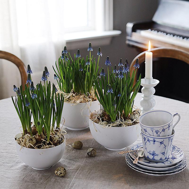 floriss-vaarblomster-perleblomst-i-potter-paa-bord.jpg