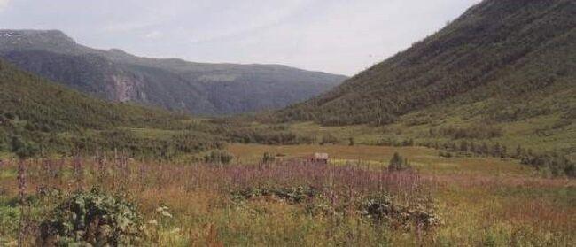 Yngsdalen naturreservat (foto: Statsforvaltaren)