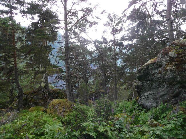 Drægnismorki-Yttrismorki naturreservat (Foto: Statsforvaltaren)