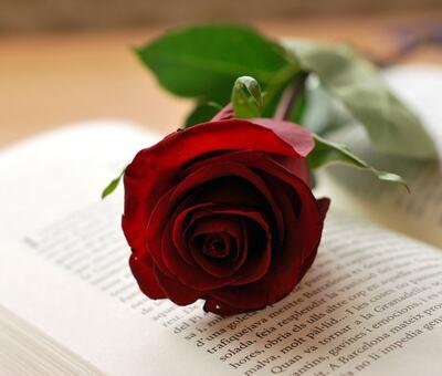 Verdas bokdag rose