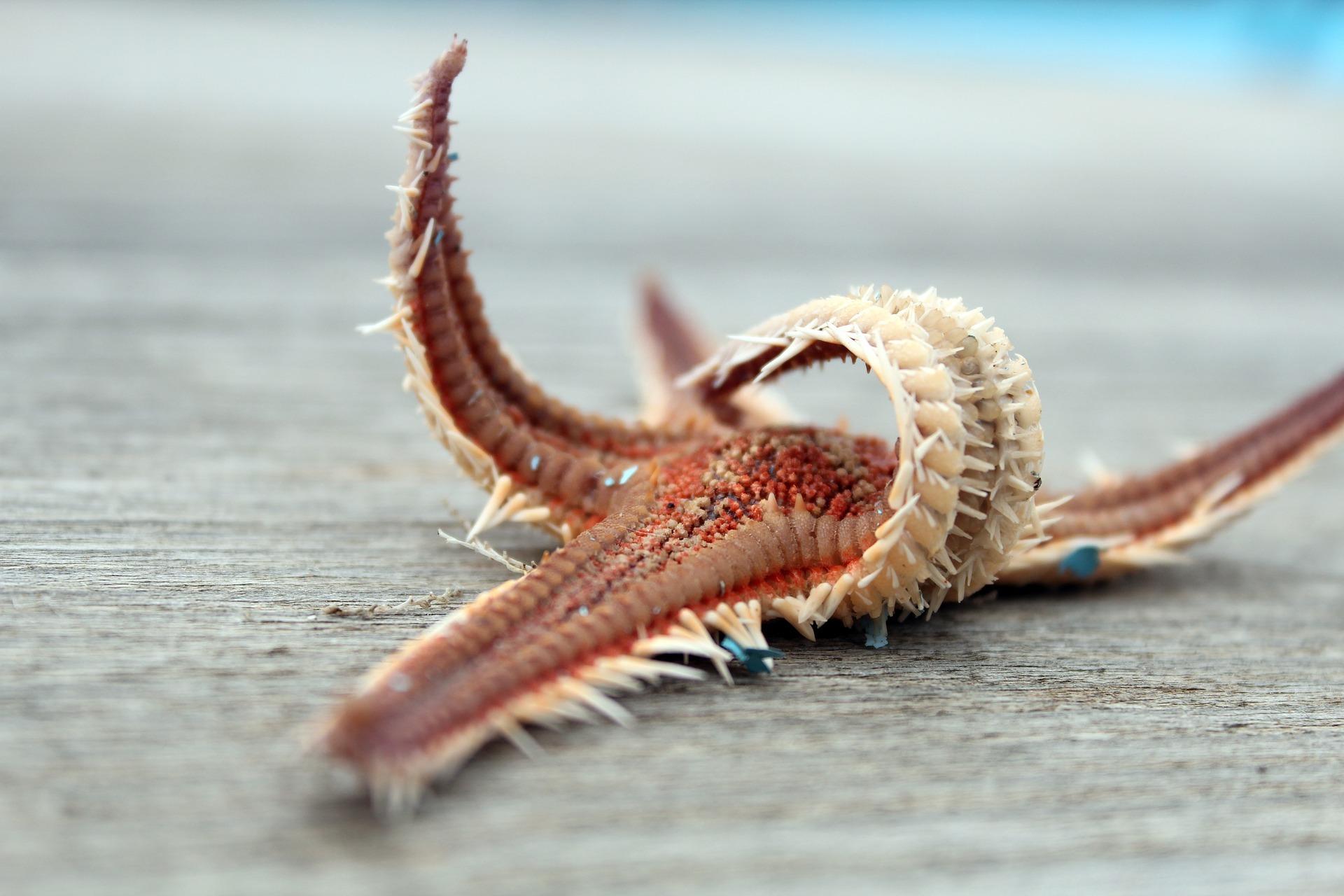 starfish-2305028_1920.jpg