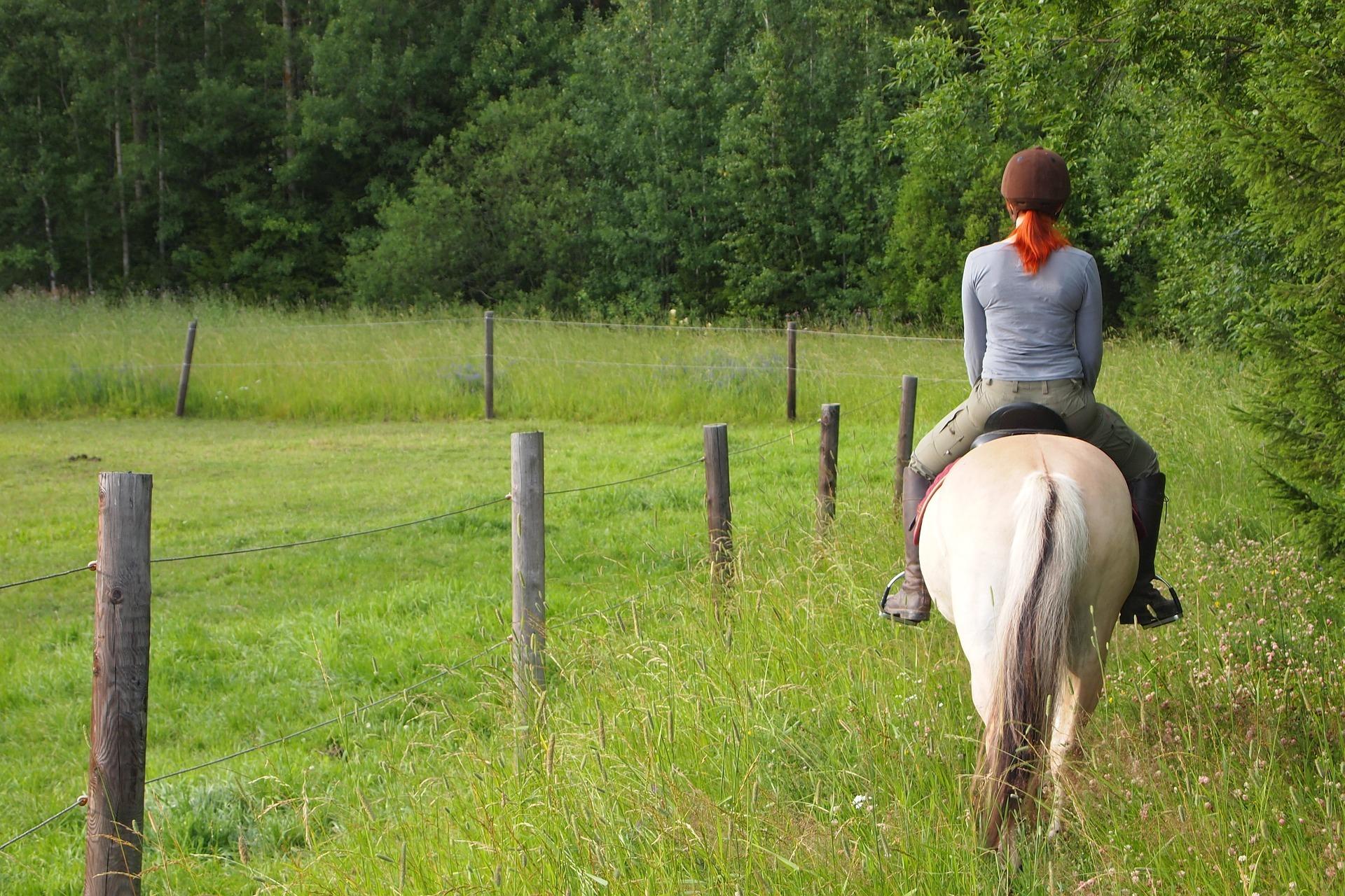 horseback-riding-3855677_1920.jpg