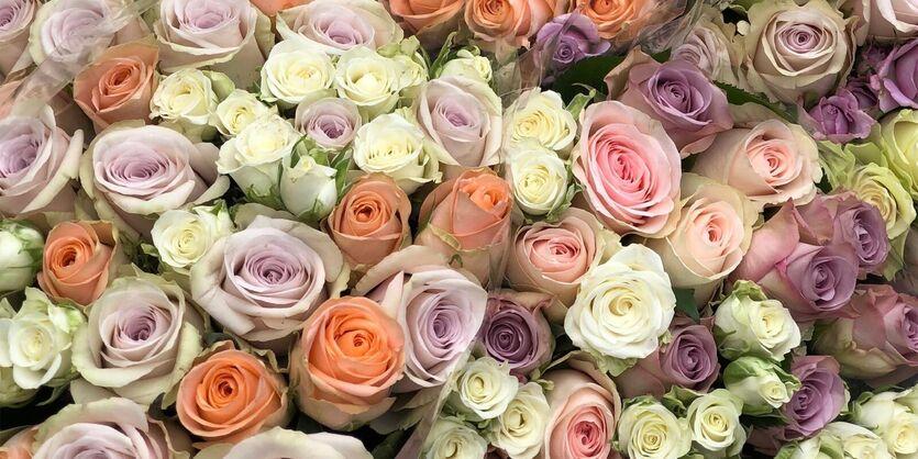 En pastellfarget Rosedrøm