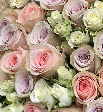 pastellfargede roser floriss 2_.jpg