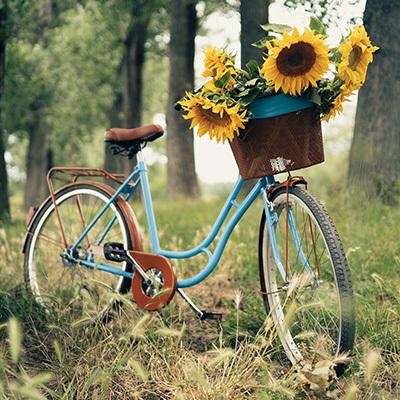 solsikker-til-pynt-paa-sykkel.jpg