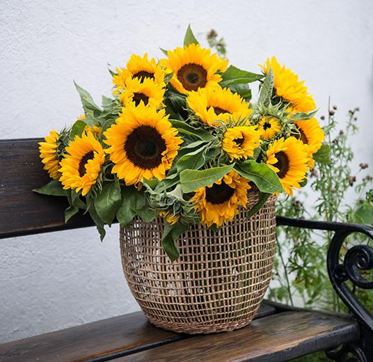 solsikker-yndlingsblomst-paa-sensommeren-floriss.jpg