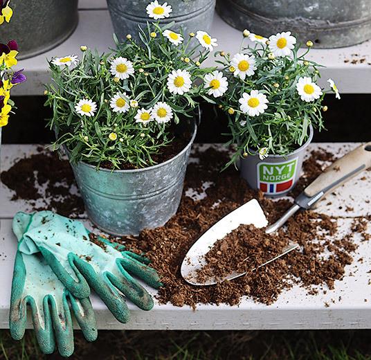 utplanting-margeritter-hansker-og-spade.jpg