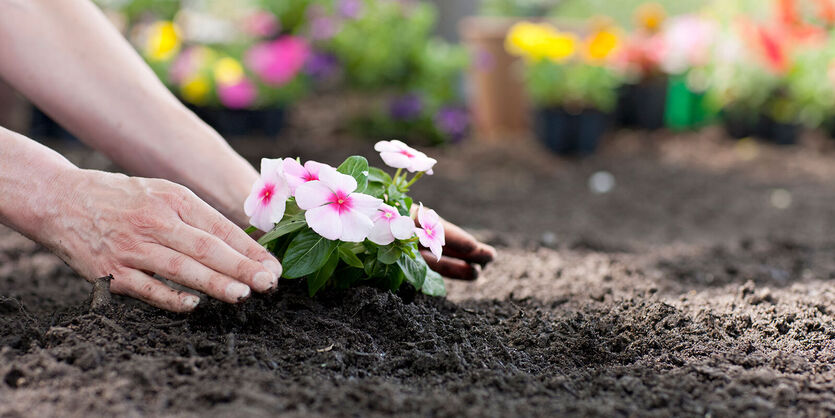 Våre beste tips til utplanting