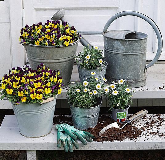 utplanting-margeritter-stemor-floriss-v2.jpg