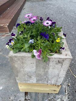 blomsterpotte2A