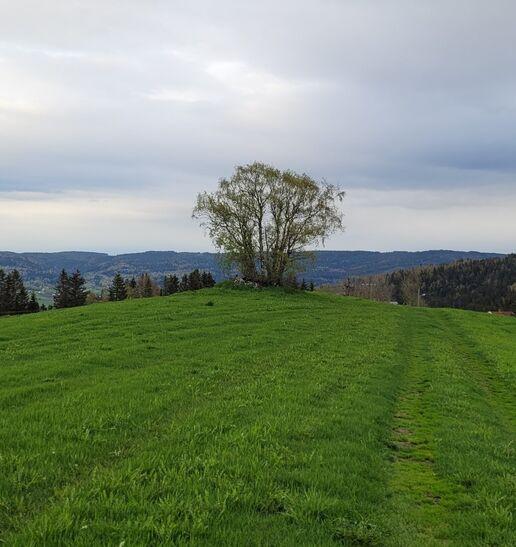 grønn eng med tre