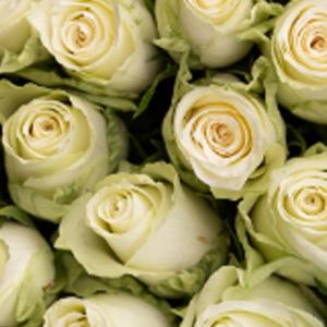 athena-favorittroser-floriss.jpg