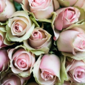 belle-rose-favorittroser-floriss.jpg